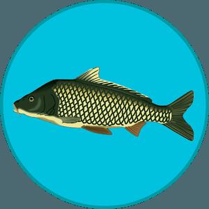 ВЗЛОМ Реальная Рыбалка